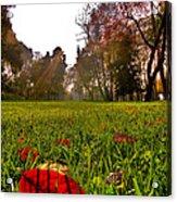 Red Leaf Under The Hot Autumn Sun  Acrylic Print
