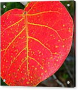 Red Leaf With Yellow Veins Acrylic Print