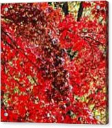 Red Leaves 3 Acrylic Print