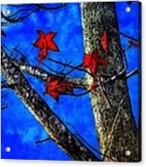 Red Leaves Blue Sky In Autumn Acrylic Print