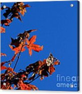 Red Leaves Blue Sky Acrylic Print