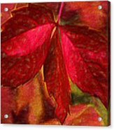 Red Leaves - Cave Dwelle Acrylic Print