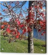 Red Leaves Acrylic Print