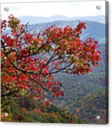 Red Leaves In The Blueridge Acrylic Print
