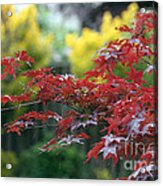 Red  And  Yellow  Leaves  Acrylic Print