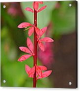 Red Leaves2 Acrylic Print