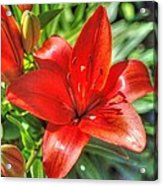 Red Lily 2 Acrylic Print