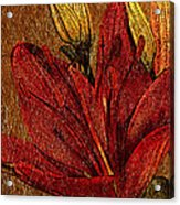 Red Lily Gold Leaf Acrylic Print
