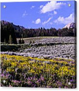 Red Lodge Spring Acrylic Print by Rebecca Adams