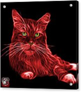 Red Maine Coon Cat - 3926 - Bb Acrylic Print
