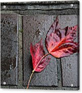 Red Maple Bricks Acrylic Print