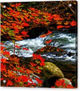Red Maple Stream  Acrylic Print