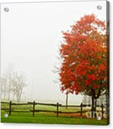 Red Maple Tree And A Split-rail Fence Acrylic Print
