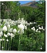 Red Mountain Beargrass Acrylic Print