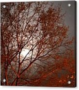Red Oak At Sunrise Acrylic Print