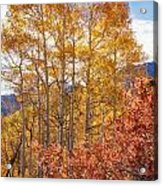 Red Oak Brush And Golden Aspens Acrylic Print
