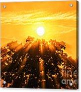 Red Oak Sunrise Fog Acrylic Print