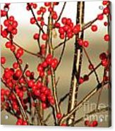 Red On Gold Acrylic Print