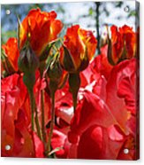Red Orange Roses Art Prints Floral Photography Acrylic Print