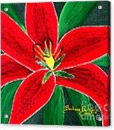 Red Oriental Daylily Acrylic Print