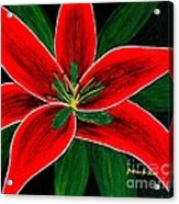 Red Oriental Lily Acrylic Print