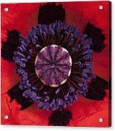 Red Papaver Orientale Acrylic Print