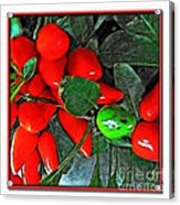 Red Pepper Plant Acrylic Print