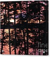 Red Pines Acrylic Print