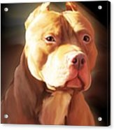 Red Pit Bull By Spano Acrylic Print by Michael Spano