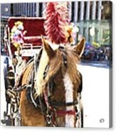 Red Plumes Acrylic Print