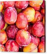 Red Plums Acrylic Print