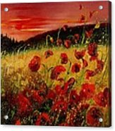 Red Poppies And Sunset Acrylic Print