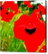 Red Poppies Acrylic Print by Mamie Gunning