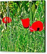 Red Poppies Near Meryem Ana Evi-cottage Believed To Be Mary's Last Home-turkey Acrylic Print