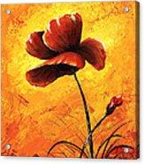 Red Poppy 012 Acrylic Print