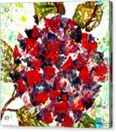 Red Purple Flower Acrylic Print