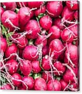 Red Radishes  Acrylic Print