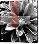 Red Rain Blossom Acrylic Print