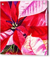 Red Red Christmas Acrylic Print