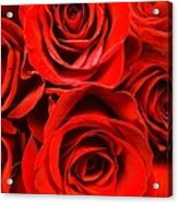 Red Red Rose Acrylic Print