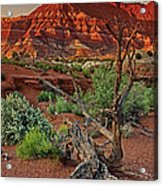 Red Rock Butte And Juniper Snag Paria Canyon Utah Acrylic Print