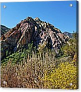 Red Rock Canyon With Foliage Acrylic Print