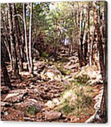 Red Rock Pine Forest Acrylic Print