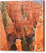 Red Rocks - Bryce Canyon Acrylic Print