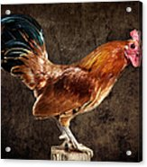 Red Rooster On Fence Post Acrylic Print