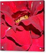 Crimson Blush 1.2 Acrylic Print