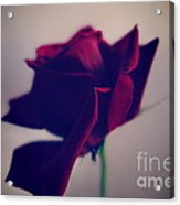 Red Rose Abstract Acrylic Print