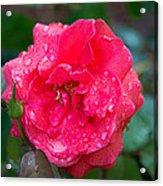 Savannah Ga Red Rose After A Rain Acrylic Print