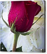 Red Rose And Kale Flower Acrylic Print