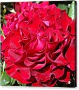 Red Rose Art Prints Big Roses Floral Acrylic Print